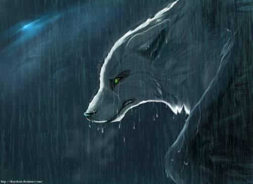 Картинки волков картинка волка
